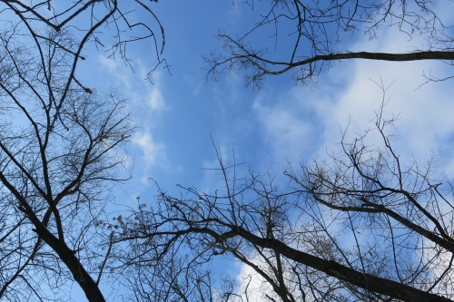 Love it when we can see the beautiful blue sky in the winter